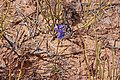 2015.05.09 15.44.23 IMG 2121 - Flickr - andrey zharkikh.jpg