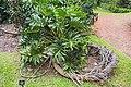 2016 Singapur, Ogrody botaniczne (144).jpg