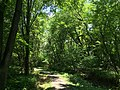 2017-06-18 12 35 09 A wooded walking trail in the Franklin Farm section of Oak Hill, Fairfax County, Virginia.jpg