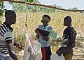 2017.10-458-284ap agricultural scientist,sorghum,weighing,writing INERA Res.Stn Saria(...),BF mon23oct2017-1100h.jpg