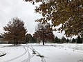 2018-11-15 09 18 08 A couple snow and sleet covered Pin Oaks along a parking lot in Franklin Farm Park in the Franklin Farm section of Oak Hill, Fairfax County, Virginia.jpg