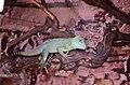 2019. Крокодиловый каньон в Ейске 070.jpg
