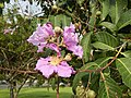 2142jfPink flowers Clark Freeport Zonefvf 08.JPG
