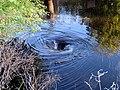 21 Bennetts Point RD Green Pond SC 6848 (12397633213).jpg