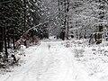22 - Forêt de Roumare - Hiver 2005.jpg