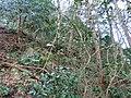 2 Chome Tsukimichō, Tajimi-shi, Gifu-ken 507-0043, Japan - panoramio (7).jpg