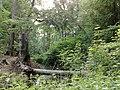 3981 Bunnik, Netherlands - panoramio - Alexandros Georgiou (19).jpg