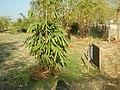 43Lubao Bamboo Hub & Eco-Park Santa Catalina Pampanga 25.jpg