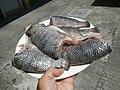 489Best foods cuisine of Bulacan 08.jpg