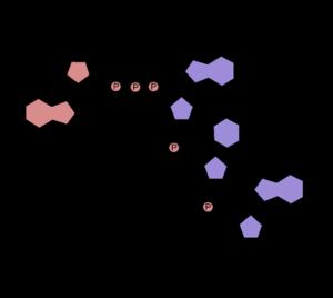 Five-prime cap - 5′ cap structure (cap-2).