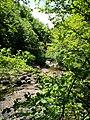 51 Turismo Emilia Romagna 8 giugno 2019 Parco dei laghi di Suviana e Brasimone, un ringraziamento speciale alle guide Eugenia e Walter.jpg
