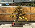 71st Nagoya Castle Chrysanthemum Exhibition 2018 07.jpg