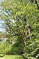 7 Eichen Kuhwasen 06.jpg