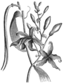 AGTM D120 The vanilla plant.png