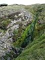 A Hidden Stream - geograph.org.uk - 948428.jpg