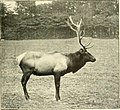 A History of Land Mammals in the Western Hemisphere - elk.jpg