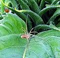 A Ladybird's Hasty Retreat - geograph.org.uk - 39315.jpg