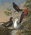 A Moorhen A Gull A Scarlet Macaw and Red-Rumped A Cacique By A Stream in a Landscape by Philip Reinagle.jpg