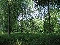 A Shady Wood - geograph.org.uk - 898125.jpg