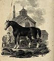 A dray horse standing in front of the dray with the drayman Wellcome V0020733.jpg