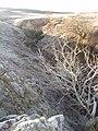 A frosty Fumart Glen. - geograph.org.uk - 1093076.jpg