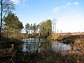 A frozen pond - geograph.org.uk - 1124215.jpg