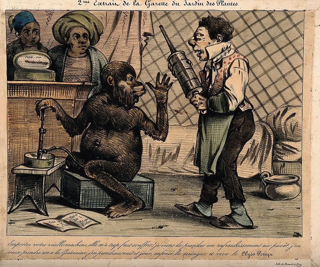 Mono rechazando un enema (dibujo satírico, s. XIX)