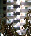 A night view - Flickr - odako1.jpg
