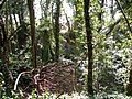 Abandoned chalk pits in Eaton, Norwich - geograph.org.uk - 2303816.jpg