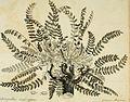 Abhandlung über die venerische Krankheit (1788) (14594571437).jpg