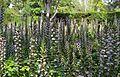 Acant als jardins de Vivers, València.JPG
