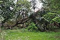 Acharya Jagadish Chandra Bose Indian Botanic Garden - Howrah 2011-02-20 1635.JPG