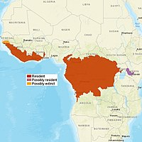 AfricanGoldenCat distribution