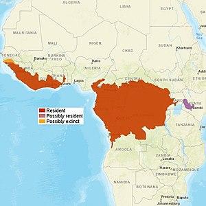 AfricanGoldenCat distribution.jpg