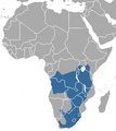 African Striped Weasel area.png