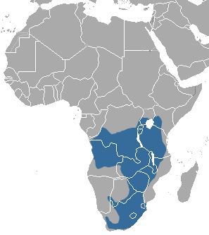 African Striped Weasel area