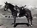 Albino, Cavallo d'Italia.jpg