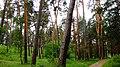 Aleksin, Tula Oblast, Russia - panoramio (100).jpg