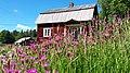 Aleksis Kiven kodin niittykukkia.jpg