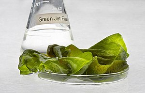 "Algae fuel - A conical flask of ""green"" jet fuel made from algae"