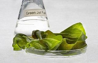 Algae fuel Use of algae as a source of energy rich oils