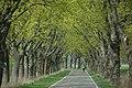Allee-des-Jahres-2011 Linumhorster-Str-Michalek.jpg