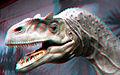 Allosaurus Refleshed.jpg