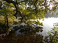 Almind sø - panoramio.jpg