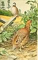 American game-bird shooting (1910) (14752290231).jpg
