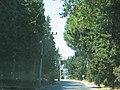 Anayol üzerinde (Davutlara az kaldi) - panoramio.jpg