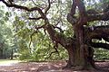 Angel Oak Johns Island SC horz.jpg