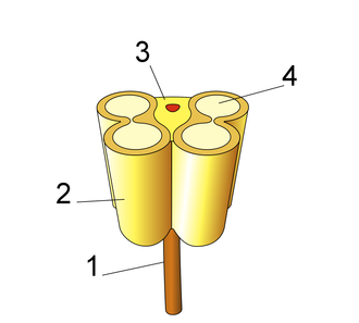 Tapetum (botany) - Schematic of anther ( 1: Filament 2: Theca 3: Connective 4: Pollen sac or Microsporangium)
