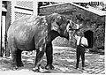 Antoni Jonch al Zoo de Barcelona.jpg