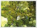 April Freiburg Botanischer Garten - Master Botany Photography 2013 - panoramio (3).jpg